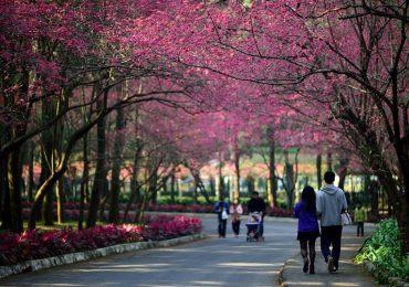 Du lịch Đài Loan mùa xuân có gì?